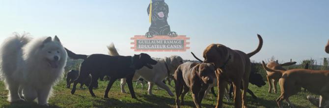 Formation éducateur canin comportementaliste.