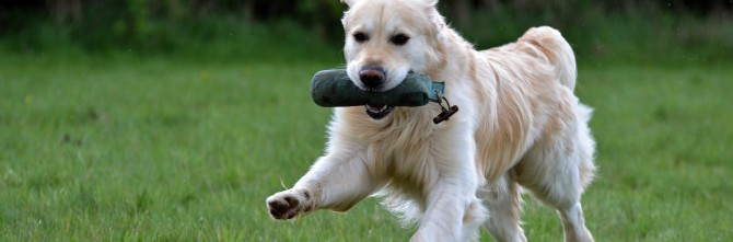 Cours individuels – Éducation canine