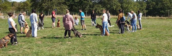 Cours collectifs chiots / adultes